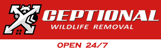 Xceptional Wildlife Removal